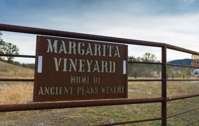 Margarita Vineyard