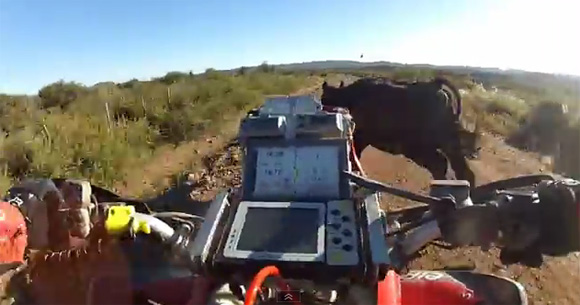 ATV Cow Crash
