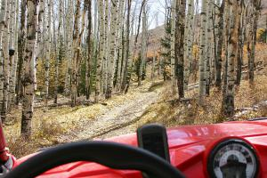 Thanks to its 50-inch width, narrow trails are no problem for the RZR.